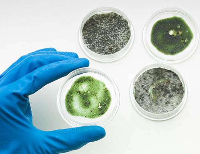 Microbiology | Mold Testing Lab Services | UAE